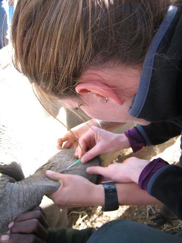 Rhino catheter