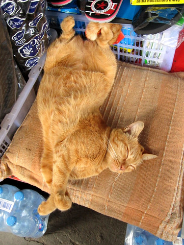 Very relaxed cat in a market in Chiang Mai