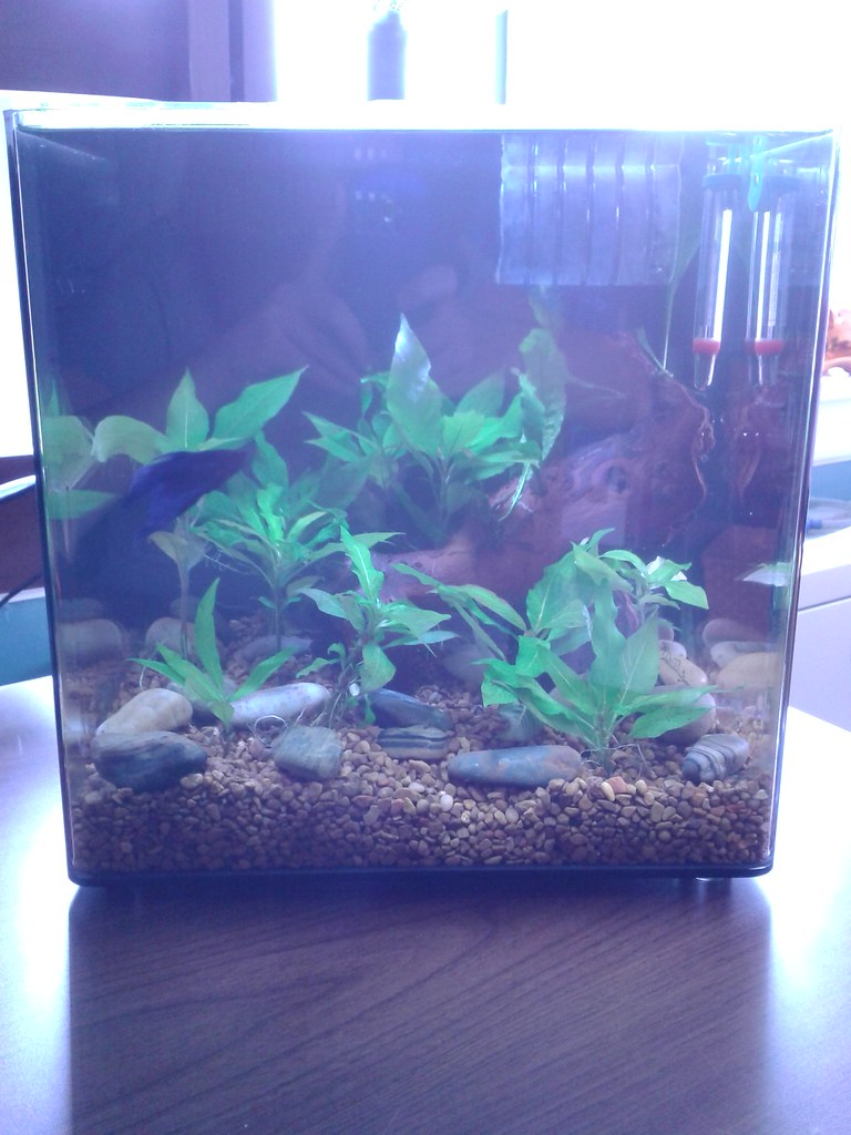One month in aqueon evolve 8 betta fish and betta fish care for Betta fish tanks petco