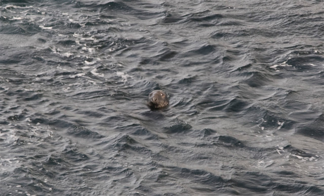 seal in