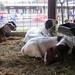 AACO-Fair-2012 - 09