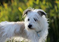 winston the dog