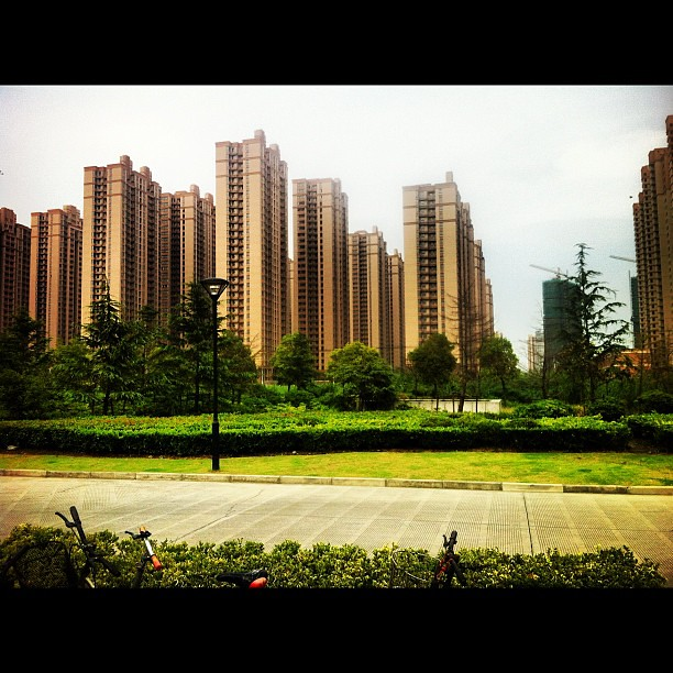 And this here is what we call a #Pudong persimmon grove #shanghai