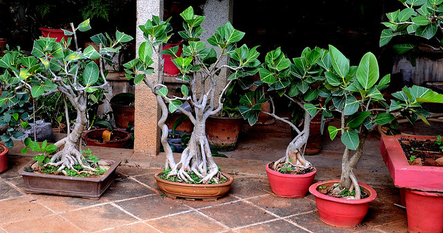 BONSAI TREES IN A GARDEN!!!!