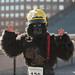 2012-09-22 gorillas-3253