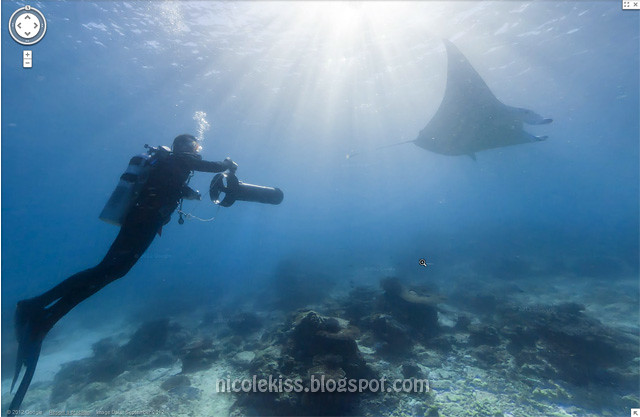 lady elliot island chasing underwater panaroma