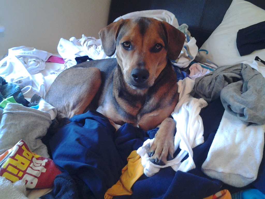you look like you needed help with the laundry