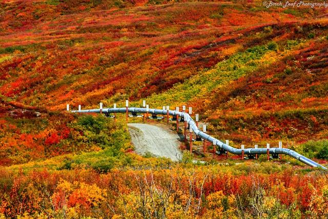 9-23-12_Paxson-Alaska_Alaska-Pipeline-winding-through-BRIGHT-fall-colors_FB_Tracey-Mendenhall-Porreca