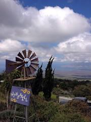 Windmill Guard