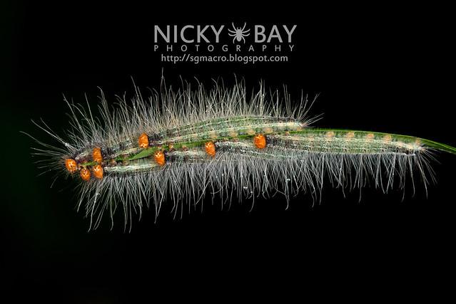 Caterpillars - DSC_8983