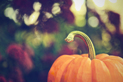 Twisty pumpkin stem.