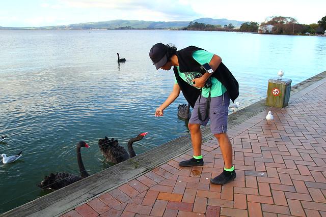 Feeding Black Swan