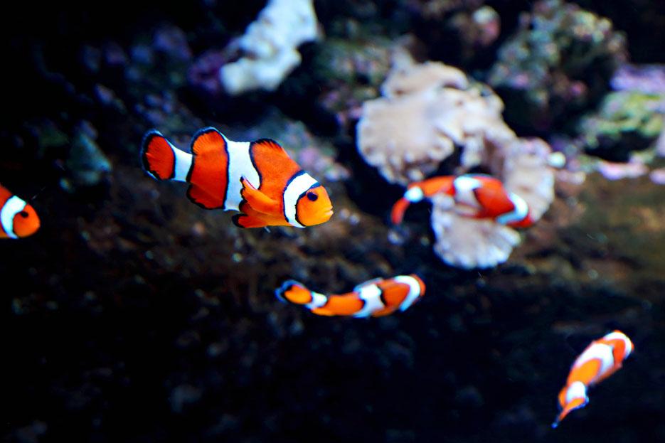 093012_aquarium11