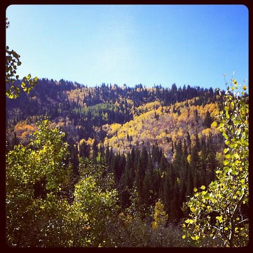 Little Cottonwood Canyon. #cantgetenoughofthefallcolors