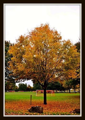 park fall otsiningopark chenangovalleystatepark