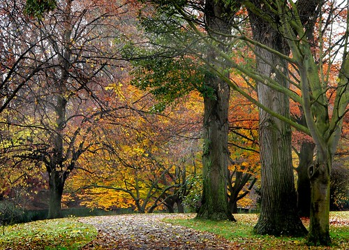 Hagley Park New Zealand. (25)