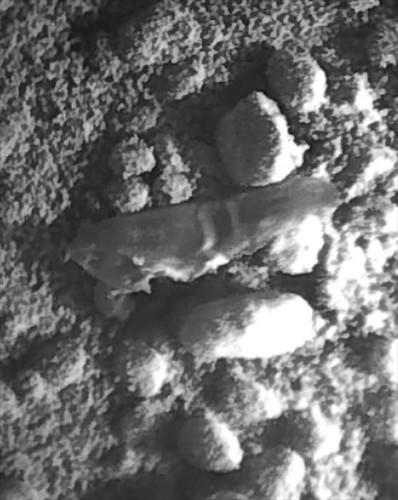CURIOSITY sol 62 ChemCam detail