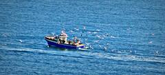 Tras las sardinas