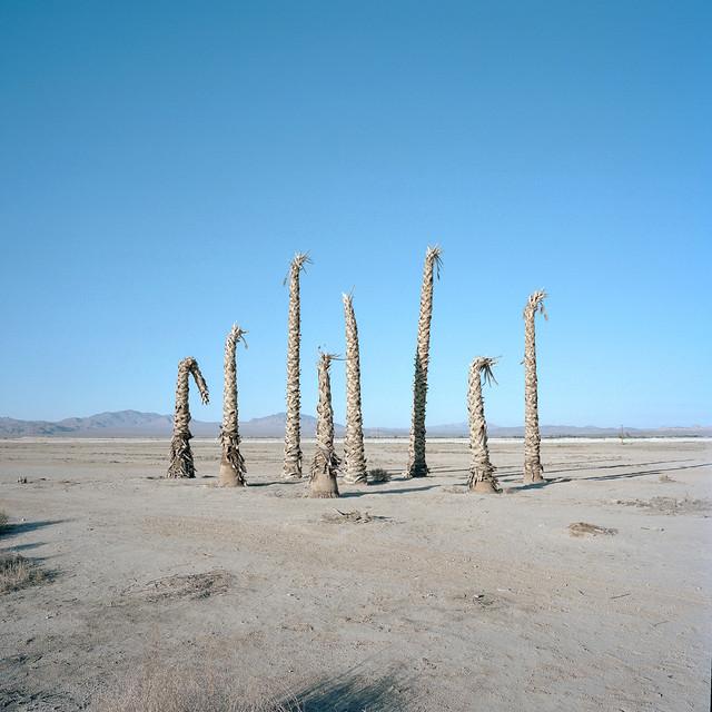 nihilist palms. lucerne valley, ca. 2014.