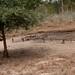 Angola impressions - IMG_2808_CR2_v1