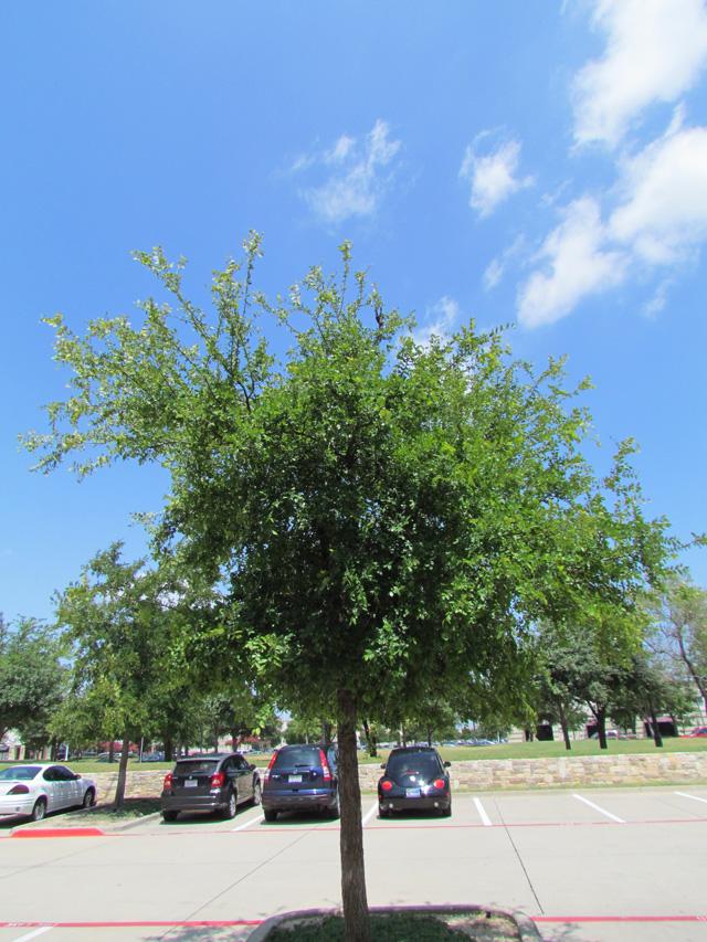 bird tree 1