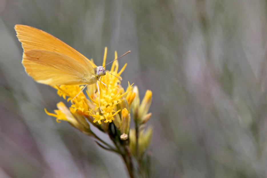 081412_03_butterfly
