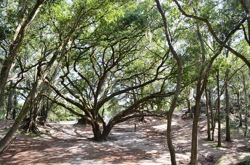 Sacred Hills - Edward Medard Park (8)