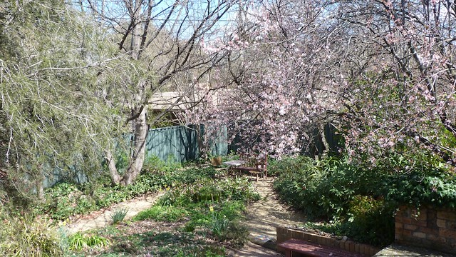 My garden in early spring