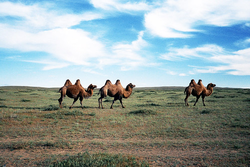 blue wild sky film nature field animals clouds desert mongolia camels contaxt3 gobidesert dundgovi