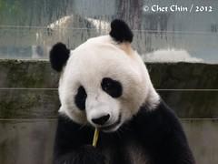 Zhen Zhen at breakfast