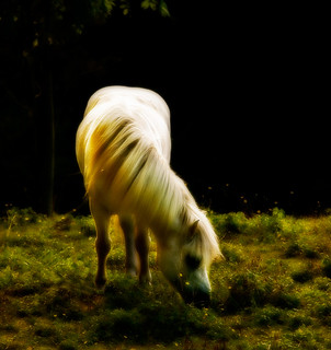 Horse in eveningsun