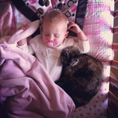 Proof that a.) Cora sleeps best next to a warm body and b.) that she does occasionally use her crib #rotten #cat