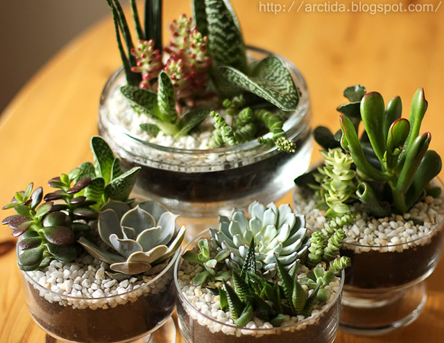 DIY Succulent gardens - tutorial how to instructions tabletop centerpiece