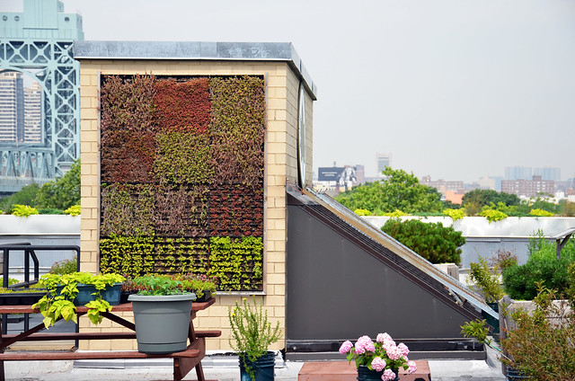 A modular vegetated wall system is just one of many innovations that the city Parks Department is testing on its Randall's Island building. Photo by Tara Thayer