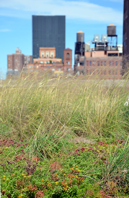The U.S. Postal Service installed a semi-intensive green roof system on its massive 1933 midtown Manhattan distribution center as part of a retrofit that is saving $1 million per year in energy costs. Photo by Tara Thayer.