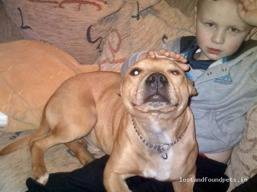 Tue, Sep 25th, 2012 Lost Male Dog - Wexford, Folks Mills, Wexford