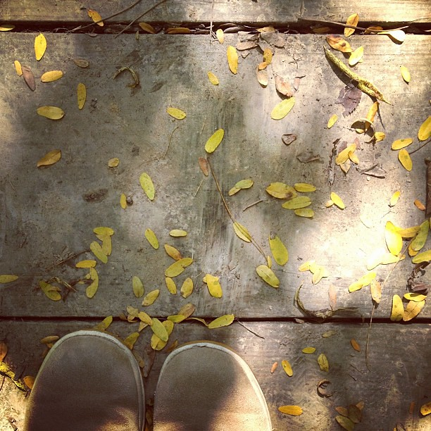 Scattered #perfectfallday #fromwhereistand #leaves