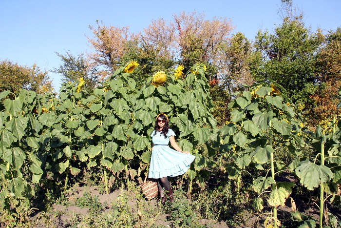 thriftaholic_giantsunflowers2