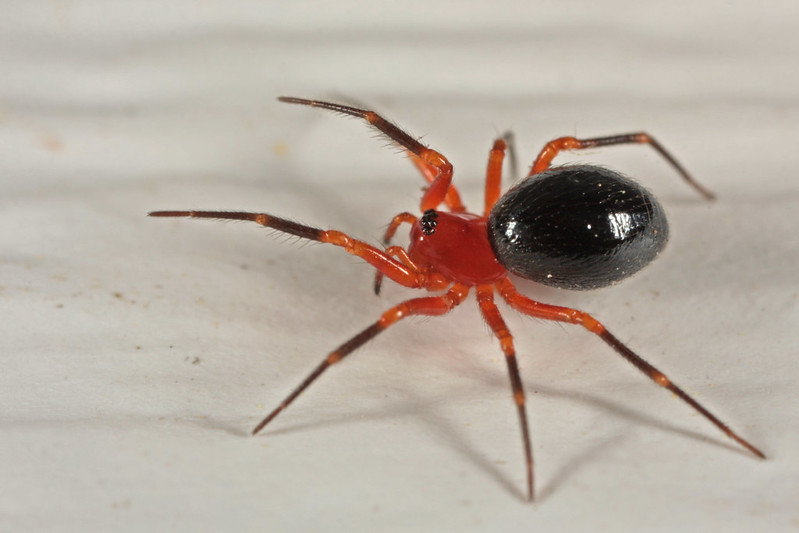 20120506_104313_spiders