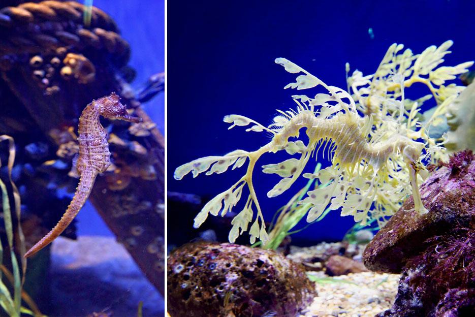 093012_aquarium05