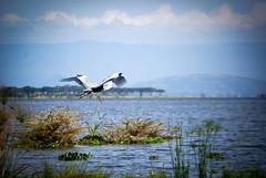 2012 Kenya Outing (5 of 79)
