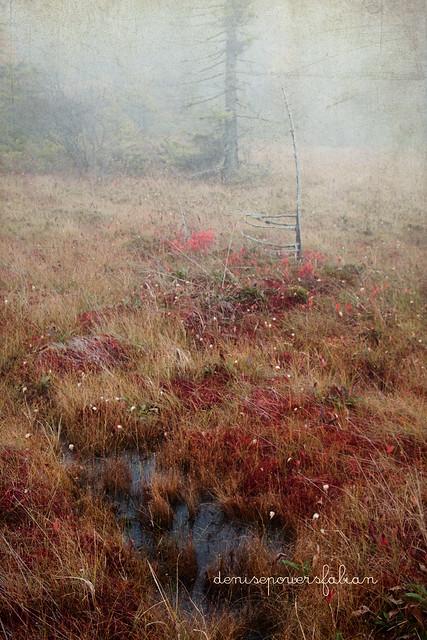 Bog in Autumn