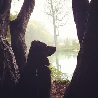 Squirrel watcher in the fog.