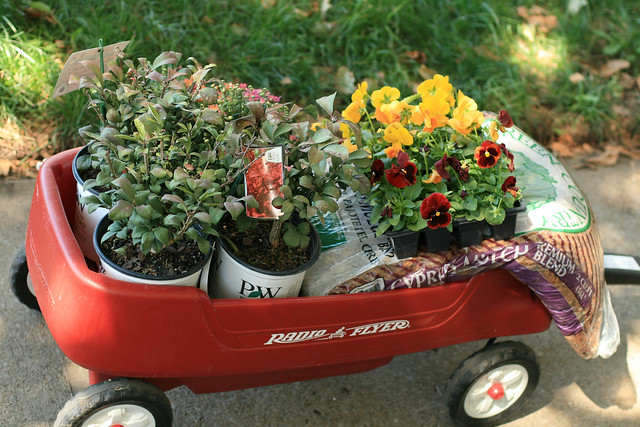 Little Red Wagon Full 'o Flowers
