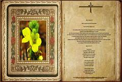 Lectura Carta de San Pablo a los Efesios 1,15-23. Obra Padre Cotallo