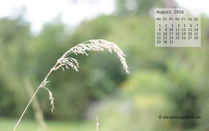 grashalm_august_kalender_die-photographin