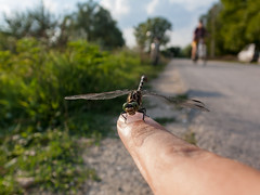 Dragonfly perched on my finger
