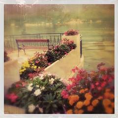 lungolago flowers