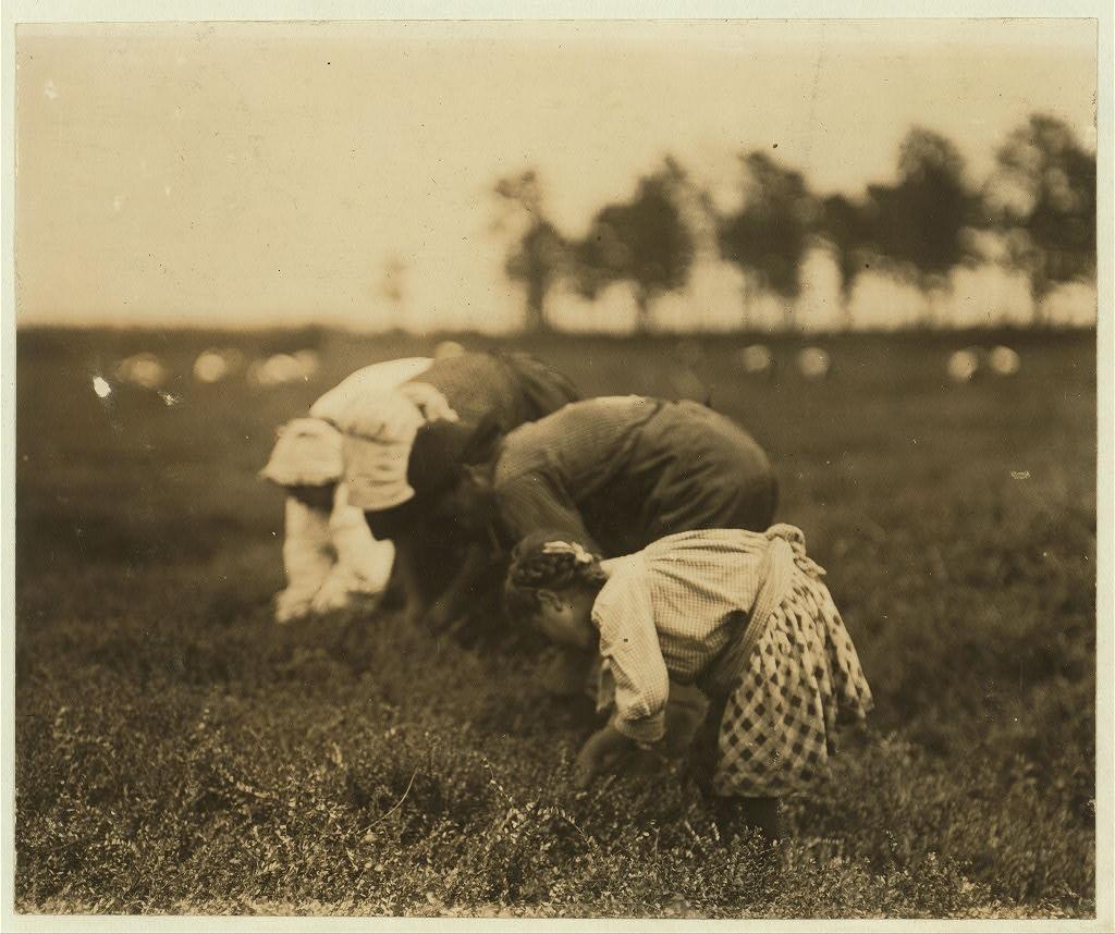 Tenjeta Calone, Philadelphia, 10 years old. Been picking cranberries 4 years. White's Bog, Browns Mills, N.J.