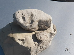 Three fossil rocks